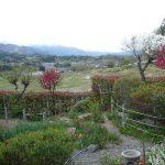 横瀬町 埼玉県最大級棚田の見える家
